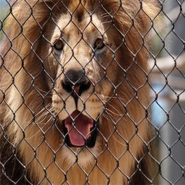 Stainless Steel 304 Anti biting Zoo Wire Mesh For Animals-Lion Protective Fencing mesh
